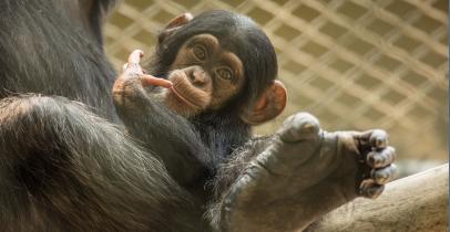 Praznovanja rojstnih dni živali v ZOO Ljubljana